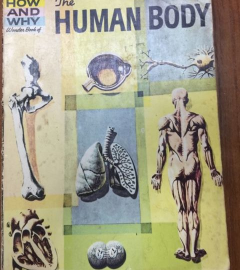 The How and Why Wonder Book of the Human Body - Martin Keen book